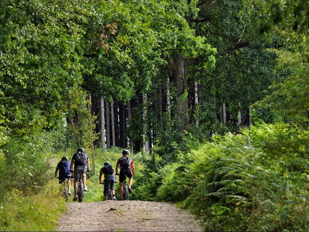 . Forêt d'Ardenne .